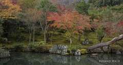Kyoto Autumn - Tenry-ji (Rolandito.) Tags:  japan nippon japon kyoto kyto tenryji temple park lake tree autumn fall herbst maple