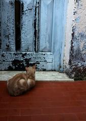 attesa fiduciosa (robra shotography []O]) Tags: door gatto square porta cat fujix100s lazio sooc