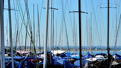 #78/100 - Whitstable Masts (Rum Bucolic Ape) Tags: whitstable bay mast masts boat boats coast summer kent