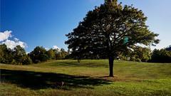 Margot (Franco Vannini) Tags: madonnadelfaggio tuscany toscana beech oak faggio quercia autunno goldenretrievers