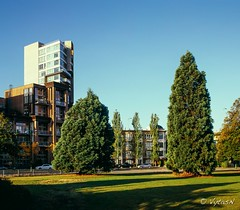 Two Trees (Vytas801) Tags: velvia50 southgranville pentax67shift75mmf45 pentax6x7