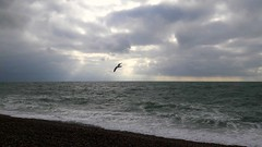 Expectations (crashcalloway) Tags: sea shore hastingsseashore clouds seagull bird flight hastings southcoast coast eastsussex sussex 1066country nature sky