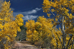 Williams Ranger District Fall Colors 2016 (Kaibab National Forest) Tags: 2016 arizona billwilliamsmountain kaibabnationalforest williamsrangerdistrict autumn fallcolors forest landscape leaves trees usa