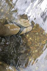Sentir (Davirowisky) Tags: davirowisky natureza canon 50mm planta arvore agua rio cachoeira cachu water paisagem ituiutaba minasgerais mg brasil cerrado