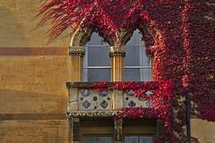 Autunno rosso / Red Autumn (Oxford, Oxfordshire, United Kingdom) (AndreaPucci) Tags: oxfordshire oxford uk college autumn red christchurch andreapucci canoneos60 university