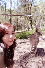 2016.10.10 Kangaroos @ Paradise Country (amydon531) Tags: baby boys kids brothers justin jarvis family toddler cute   gold coast australia trip travel vacation paradise country  kangaroos