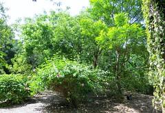 Shrubbery 5009 (Tangled Bank) Tags: heathcote botanical gardens martin county florida plant flora botany botanic shrubbery