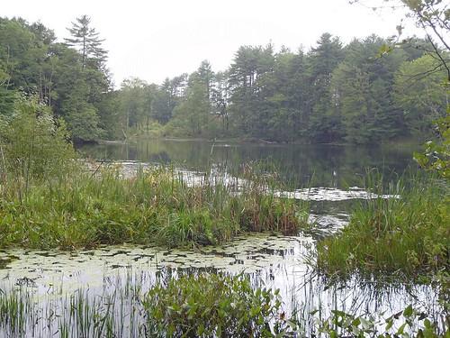 Duck Pond - www.amazingfishametric.com