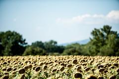 TuscanyUmbria-1018