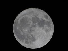 Superluna ..... (14.11.2016) (Deneb56) Tags: luna superluna moon bluemoon lunapiena chiarodiluna astronomia astronomy