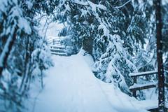 Pathway (Olli Karjalainen) Tags: tokina1224mm myllykoski