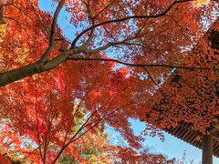 2016  (shinichiro*) Tags:    jp 20161122img5824 2016 crazyshin appleiphone7plus iphone   november autumn niiza saitama japan
