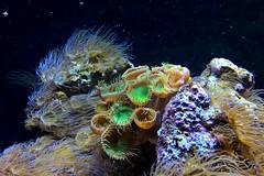 Aquarium 1 (stempel*) Tags: espanya gambezia barcelona windowsphone aquarium coral reef
