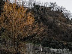 Winter colours (Massimo Saviotti) Tags: flickr alberi albero collina colline hill hills inverno pianta piante plant plants tree trees winter