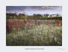 Late Autumn Sunrise (baldwinm16) Tags: il illinois midwest sunrise november fall autumn nature natureofthingsphotography