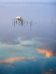 Swimming in the sky, Norway (Vest der ute) Tags: g7x natur norway rogaland djupadalen waterscape water swan reflections mirror clouds fav25 fav200