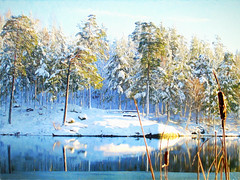 Who can resist snow and sun? (BirgittaSjostedt.-computer problem again.) Tags: winter lake ice snow sun sunny forest tree outdoor scene serene texture paint digitalpaint pastel birgittasjostedt
