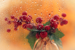 Tras la ventana en un da lluvioso (saparmo) Tags: seleccionar lluvia gotas rojo ventana otoo colores