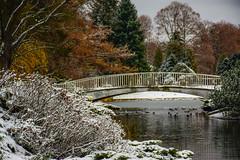_DSC0686 (Marco Sky) Tags: snow park poniatowskiego nikon d5300 lodz poland winter day lake bridge water