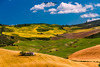 Andalusian Land (Chiara Salvadori) Tags: travelphotography andalusia cadice cadiz colors culture europe farm farmland field landscape meadow nature outdoors premiun scenery spain spring sun travel traveling village wheat