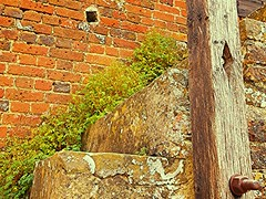In the Cracks! (springblossom3) Tags: steps stairs nature architecture aged stonework cotswolds walls