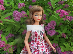 Magda & Spirea (Foxy Belle) Tags: pink misty garden bush doll dress tammy blonde bloom ideal clone perennial spyrea