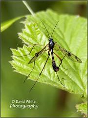 What is it? (bretton98) Tags: nature fauna dragonflies insects warwickshire damselflies darters canon50d brandonmarshnaturereserve warwickshirewildlifetrust bretton98 davidwhitephotography