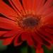 Flower misc 1