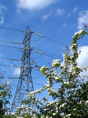 Fishers Green May 2013 (herbman101) Tags: uk blue england sky london nature photo pylon pylons hawthorn leevalley countrypark crataegusmonogyna mayblossom leevalleypark fishersgreen commonhawthorn