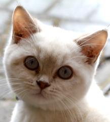 Andromeda (giogio_uk) Tags: cats kittens