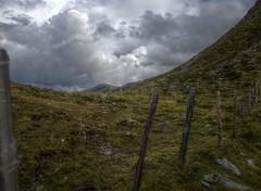 nock20 (andrew_leon) Tags: summer mountains alps austria cow europe горы лето австрия корова nockalmstrasse альпы 2013 европа