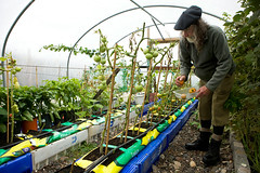 Postman in the Polytunnel