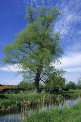 St-Omer, marais audomarois (Ytierny) Tags: france vertical canal berge reflet agriculture miroir paysage maison marais arbre ferme tuile vache pasdecalais stomer agricole audomarois ytierny