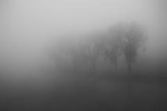 (koeb) Tags: trees bw mist fog river nebel sw fluss rhine rhein mainz bäume mayence