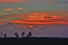 Daybreak (Bo Chambers) Tags: wild sun sunlight nature sunrise nikon day florida wildlife everglades evergladesnationalpark wilderness daybreak d7100 bochambers