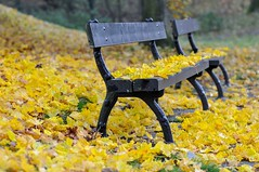 DSC_0003 - Park bench (SWJuk) Tags: park uk autumn england home leaves yellow bench golden nikon lancashire autumncolours autumnal 80200 burnley d90 towneley 2013 towneleypark nikond90 swjuk mygearandme nov2013