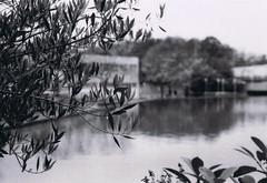Library's pond (Republic of Common Sense) Tags: canon ae1 ilford 400iso 50mmf18 hp5plus