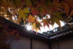 二尊院 (bamboo_sasa) Tags: autumn red leaves yellow japan kyoto arashiyama 京都 日本 紅葉 嵐山 もみじ 二尊院