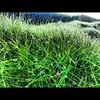 #samsung s3 #qatar #green #grass #manal #zai (zai Qtr) Tags: green grass samsung zai s3 qatar manal flickrandroidapp:filter=none