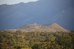 IMG_8918 (Raju's Temple Visits) Tags: favourite masinagudi vibhoothimalai