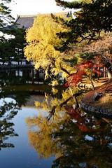Kagami ike (JuhaOnTheRoad) Tags: autumn japan asia autumnleaves nara