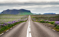 iceland roads #4 (Dennis_F) Tags: road street summer sky nature water colors beautiful horizontal landscape island iceland wasser europa europe view sommer natur north norden himmel ring vik polar landschaft isle lupin lupins farben vulkan vulcanic skogafoss lupinen strase islandic ringstrase