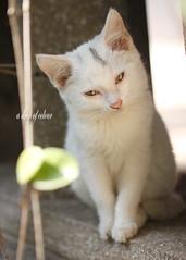 Today's cat 2014.1.5