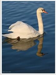 Schwanensee - Swan Lake (1)