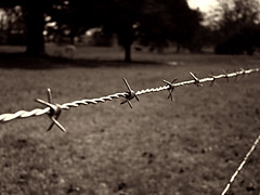 Barbs (HacksawGeneDuggan) Tags: ranch fence photo sony cybershot barbedwire barb dsch50 sonydsch50 sonyphotographing fencefriday