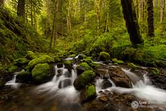 Ruckel Creek (Dan Sherman) Tags: trees green water oregon creek moss spring unitedstates pacificnorthwest gorge ferns columbiagorge columbiarivergorge cascadelocks ruckelcreek