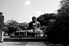 Daibutsu (Ye-Zu) Tags: voyage trip travel blackandwhite bw japan temple shrine noiretblanc kamakura buddhism bouddha daibutsu japon sanctuary sanctuaire kotokuin boudhisme japon2013