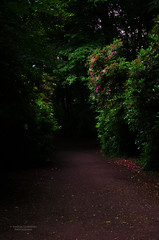 Through Wollaton (Vanessa Guerreiro Photography) Tags: park nottingham flowers england plants green nature hall united kingdom greenery passage wollaton