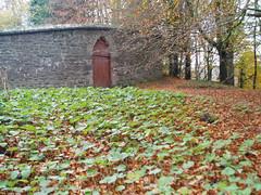 "Enclosed garden gate nov • <a style=""font-size:0.8em;"" href=""http://www.flickr.com/photos/134119275@N07/18670509968/"" target=""_blank"">View on Flickr</a>"