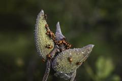 Beetle Mania :)